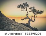 tree on rock in crimea  toned... | Shutterstock . vector #538595206