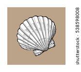 white scallop sea shell  sketch ... | Shutterstock .eps vector #538598008