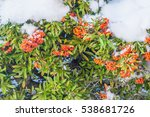 red berries on christmas time...   Shutterstock . vector #538681726