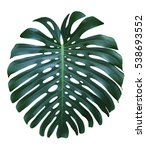 monstera large tropical jungle... | Shutterstock . vector #538693552