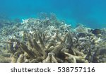 coral bleaching on the great... | Shutterstock . vector #538757116