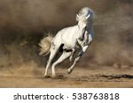 Small photo of White horse run free in desert sand dust