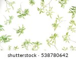 green leaves frame on white... | Shutterstock . vector #538780642