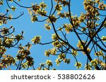 tree branch with young leaves... | Shutterstock . vector #538802626