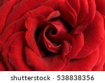 Stock photo bright rose flower 538838356