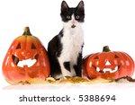 two halloween pumpkins and a cat | Shutterstock . vector #5388694