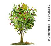 tree rowan isolated on white... | Shutterstock . vector #538926862