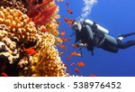 Small photo of Man scuba diver watching beautiful colorful coral reef with shoal of red fish