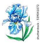 blue white iris flower in... | Shutterstock . vector #539041072