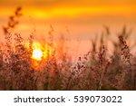 Grass Field In Sun Set Time