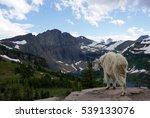 Mountain Goat Overlooking...