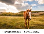 Horse Grazing In Sunset Field