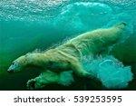 Diving Bear Taken At An...