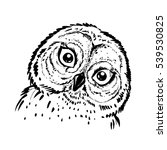 Stock vector hand drawn ink illustration owl vector eps 539530825