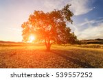 lonely tree at sunset in the... | Shutterstock . vector #539557252