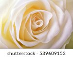 Stock photo rose 539609152