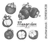 mangosteen   fruit vector... | Shutterstock .eps vector #539856928