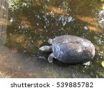 The Big Turtle Gray Color Rela...