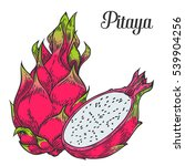 Pitaya Sketch Of Tropical...