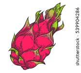 pitaya sketch of tropical... | Shutterstock .eps vector #539904286