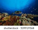 hawk fish on hard coral | Shutterstock . vector #539919568