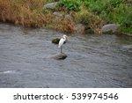 hida furukawa river canal | Shutterstock . vector #539974546