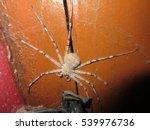 A Big Spider