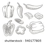 sketch chili peppers vector... | Shutterstock .eps vector #540177805