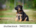adorable german shepherd puppy... | Shutterstock . vector #540213112