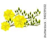 yellow apricot flower ... | Shutterstock .eps vector #540259102