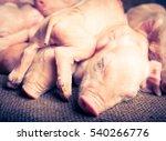 Piglets   Retro Vintage Filter...