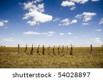Dead foxes hung along a field's fence line in rural Australia. - stock photo