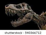 Tyrannosaurus Scull Against...