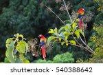 scarlet macaws in costa rica | Shutterstock . vector #540388642