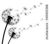 black silhouette of a dandelion ... | Shutterstock .eps vector #540402388