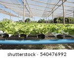 hydroponic vegetable | Shutterstock . vector #540476992