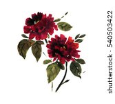 peony flowers in a traditional... | Shutterstock . vector #540503422