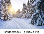 Snow covered trees in the...