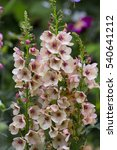 Pink Apricot Pastel Flowers Of...