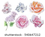 set with flowers. rose. lilac.... | Shutterstock . vector #540647212