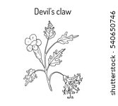 devil's claw  harpagophytum... | Shutterstock .eps vector #540650746
