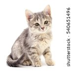 Stock photo small gray kitten isolated on white background 540651496