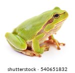 small green frog isolated on... | Shutterstock . vector #540651832