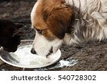Cats Drinking Milk From Bowl