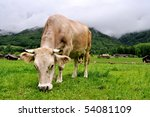 Light brown cow on a farm in the alps in Switzerland - stock photo