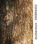 closeup bark of big tree   Shutterstock . vector #540896452