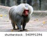baboon in a zoo | Shutterstock . vector #540991396
