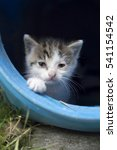 sad homeless kitten | Shutterstock . vector #541154542