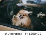 Dog Alone In A Car