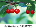Group of bright red cherries hanging in the tree with morning light. Extreme shallow DOF with room for copy space. - stock photo